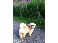 Muddy Paws / Luxury Home Dog Boarding /Dog walking Accrington Preston Blackburn Lancashire