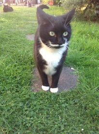 2 cats free to a good home, spayed and house trained, very affectionate and calm