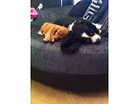 Dog walker/sitter