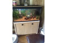 Fluval 200 litre fish tank and cabinet