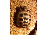 Tortoise missing