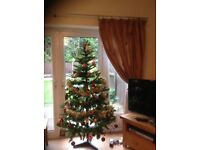 Get this years Christmas Tree nice and early !