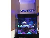 Aqua ocean / evergrow marine reef LED light like a ecotech radion but cheaper