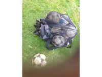footballs and adidas holder