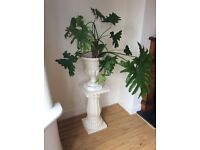 LARGE JARDINIERE FOR SALE WITH PLANT