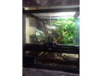 Male Crested Gecko & Planted Bio Exo Terra (30x30x30)