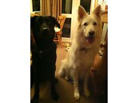 Part time dog loving volunteers wanted