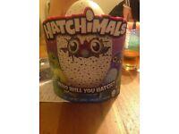 hatchimal for sale