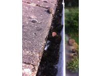 TTS Gutter Cleaning. Gutters cleaned from a ladder, photos taken before and after