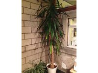 FREE plant to a good home