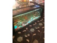 Fish tank coffee table with accessories and different types of fish