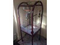 Baby African grey parrot with large cage on wheels,lots of toys,food and bowl