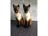 2 Large Siamese Cats