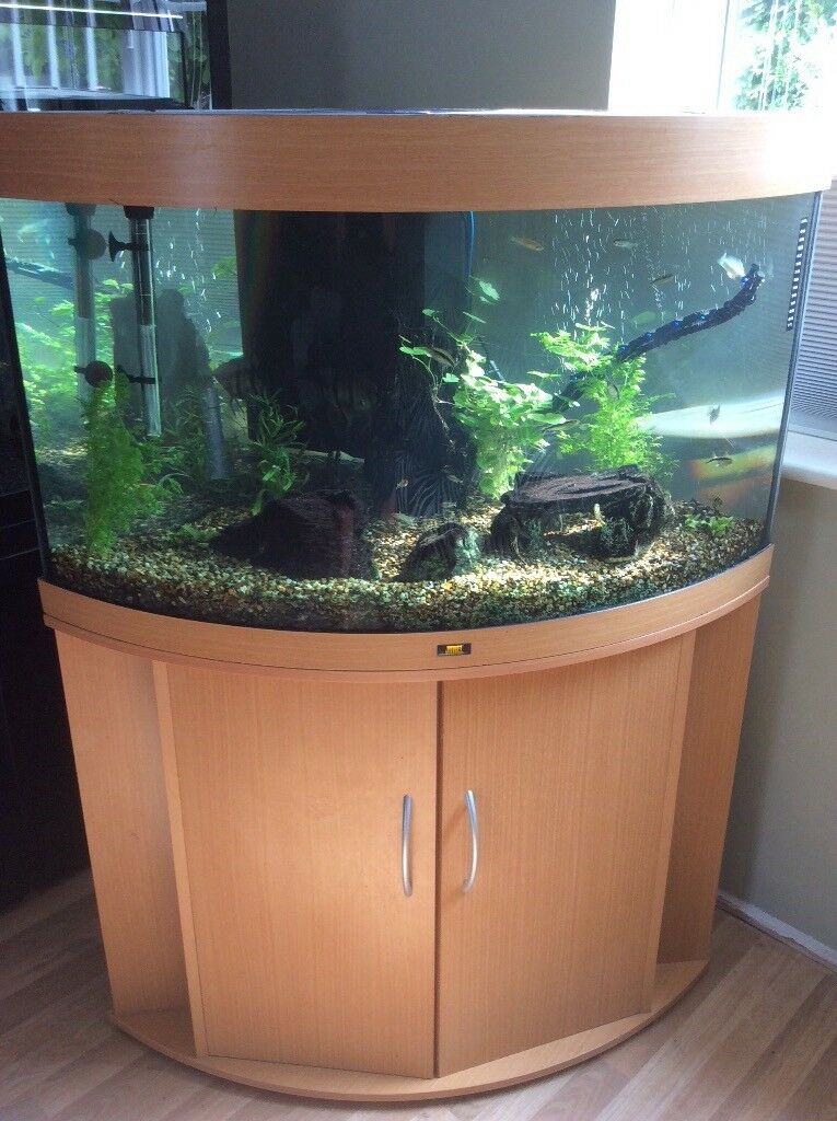 Jewel corner fish tank in dedham essex gumtree for Corner fish tank for sale