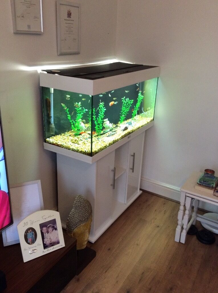 white juwel rio 180 aquarium fluval 306 filter fluval. Black Bedroom Furniture Sets. Home Design Ideas