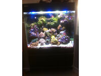 Tropical Marine Fish for sale