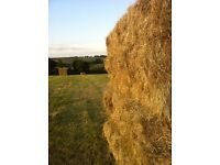 Small bales of meadow hay for sale