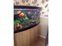Lovely 4ft bow fronted Fishtank and cabinet