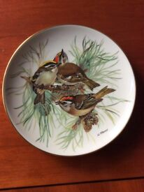 'Firecrest' - A Porcelain Plate in the Songbirds of Europe series by Ursula Band