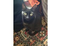 Beloved family cat for rehoming