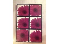 6 x small plaques with gerbera flowers on