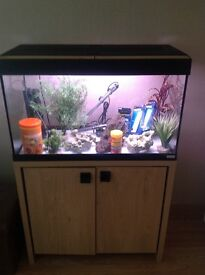 125ltr fluval fish tank and oak stand