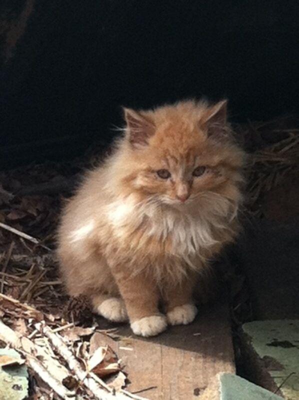 FLUFFY ORANGE KITTEN CAT ORIGINAL PHOTOGRAPH SCREENSAVER WALLPAPER COPY DONATION