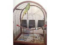 Alexandrine parrot beautiful bird