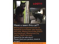 MISSING! REWARD FOR SAFE RETURN