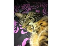 Gorgeous cat Charlie need a forever home