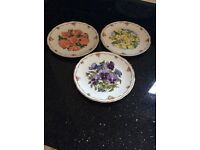 Royal Albert Decorative plates by Sara Anne Schofield