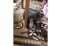 Free tabby pretty cat