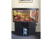 4 ft Jewel Fish Tank Full set up