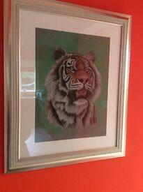 Original Tiger portrait in pastel pencils
