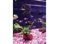 Tropical fish for sale - various types