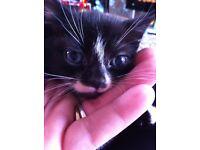 Female kittern for sale