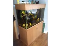 500L Discus aquarium. Ideal for any home or office space
