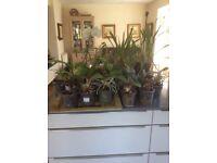 21 indoor Orchid Plants