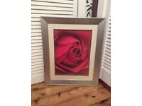 Picture of a rose in silver frame