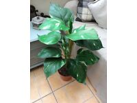 """LARGE ARTIFICIAL HOUSE/OFFICE/CONSERVATORY POTTED PLANT HEIGHT 35"""""""