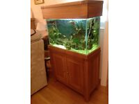 Marine fish tank, all fittings and fish