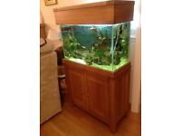 Marine fish tank, including pumps,heater, lights etc