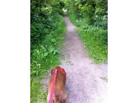 Dog Walker operating in Nottingham - Mapperley->Arnold->Hucknall
