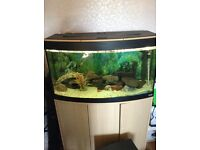 3ft bow frout fish tank