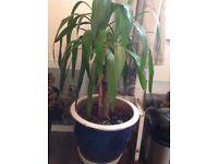 Indoor palm in decorative pot