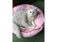 Missing cat from Lower Holway /Blackbrook area of Taunton