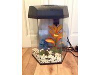 Fish Tank Aquarium hexagonal tropical cold water 20 L