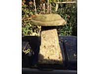 Garden concrete mushfoom