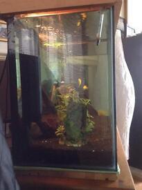 Fish tank set up