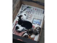 FREE FEMALE CAT & 2 KITTENS They Come together not individually NO TIME WASTERS NEED CARING OWNERS